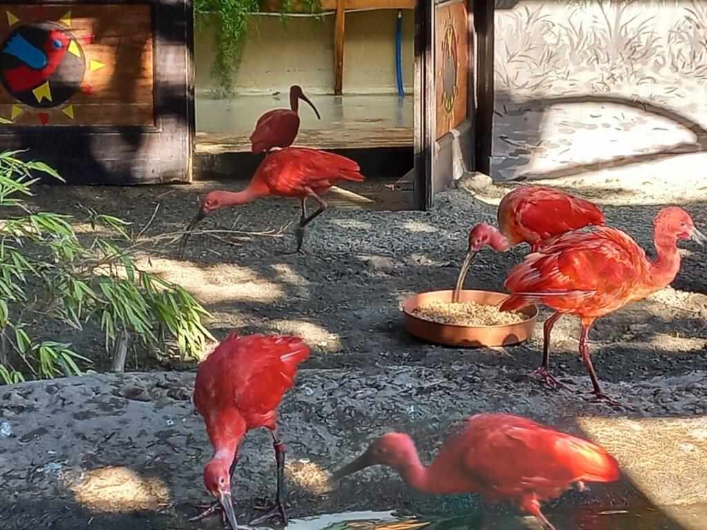 állatkert2